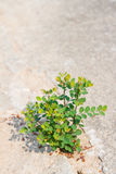 Young plant growing on pavement Stock Photo