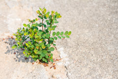 Young plant growing on pavement Stock Images