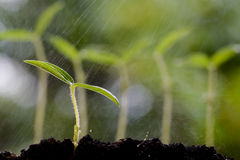 Young plant growing on soil Royalty Free Stock Photography