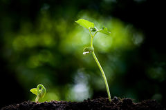 Young plant growing on soil Stock Photo