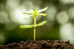 Young plant growing in soil Stock Photo