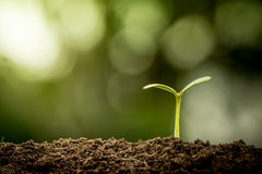 Young plant growing in soil. On green bokeh background Royalty Free Stock Photography
