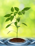 Young plant growing from soil Stock Photos