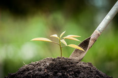 Young plant growing in soil with shovel Stock Photos