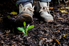 Young plant growing on soil Stock Image