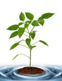 Young plant growing from soil Stock Photography