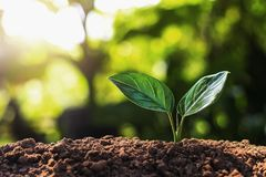 young plant growing with sun light Stock Photography
