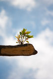 Young plant growing on tree stump Stock Images