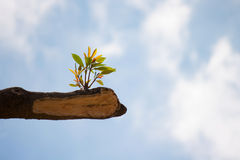 Young plant growing on tree stump. On blue sky Royalty Free Stock Images