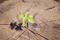 Young plant growing on tree stump, hope concept Royalty Free Stock Images