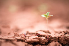 Young plant growing up on crack earth Stock Photography