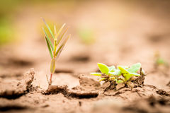 Young plant growing up on crack earth Royalty Free Stock Image