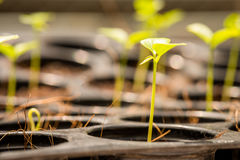 Young plant growing up Stock Images