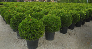 Young plant grown in nursery Stock Image