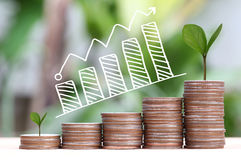 Young plant grown to stack silver coin in business growth concep Royalty Free Stock Photography