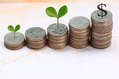 Young plant grown to stack silver coin in business growth concep Stock Photography