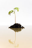 Young plant grows Royalty Free Stock Images