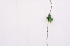 Young plant growth on the crack wall Stock Photos