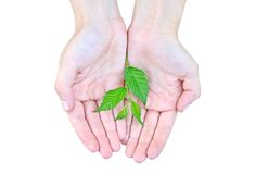 Young plant in hand Stock Photography