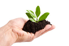 Young plant in hand Royalty Free Stock Photography