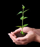 Young plant in hand on black Stock Photography