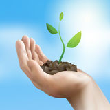 Young plant in hand.  illustration. Eps10 Royalty Free Stock Images