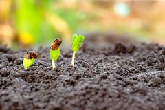 Young plant in hand.Seedling are growing in the soil with sunlight. royalty free stock images