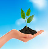 Young plant in hand  Vector Royalty Free Stock Images
