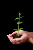 Young plant in hands Stock Images