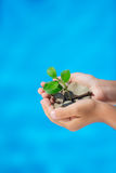 Young plant in hands against blue sea background Royalty Free Stock Photo