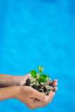 Young plant in hands against blue sea background Royalty Free Stock Image