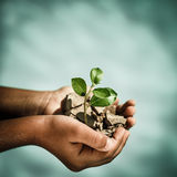 Young plant in hands against blue sea background Stock Photos