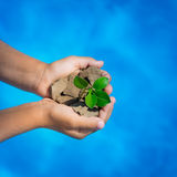 Young plant in hands against blue sea background Stock Photography
