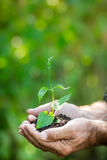 Young plant in hands against green background Stock Images
