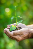 Young plant in hands against green background Royalty Free Stock Photography