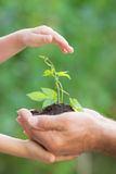 Young plant in hands against green background Stock Image