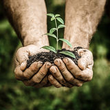 Young plant in hands against green spring background Royalty Free Stock Photos