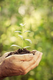 Young plant in hands against green spring background Stock Image