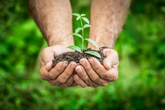 Young plant in hands against green spring background Stock Photos