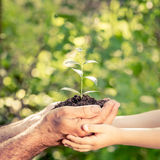 Young plant in hands against green spring background Royalty Free Stock Photography
