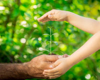 Young plant in hands against green spring background Royalty Free Stock Image
