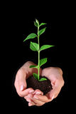 Young plant in hands on black Royalty Free Stock Photo