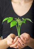 Young plant in hands of woman Stock Photos
