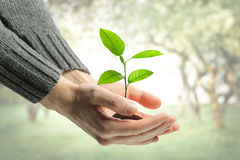 Young plant in human hands Stock Images