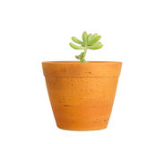 Young Plant In Pot Royalty Free Stock Photos