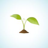 Young plant  Stock Images