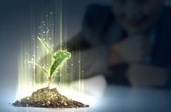 Young plant life process Royalty Free Stock Photo