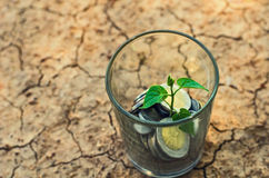 Young plant. Money growth concept in glass Royalty Free Stock Photo