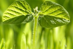 Young plant with morning dew Royalty Free Stock Photo