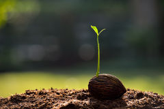 Young plant Stock Image